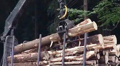 Odklízení dřeva