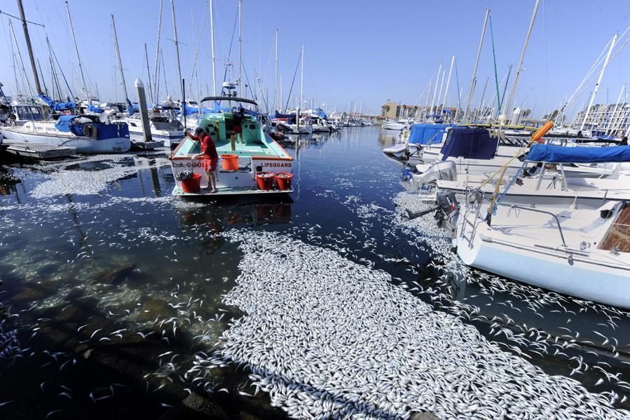 Mrtvé sardinky