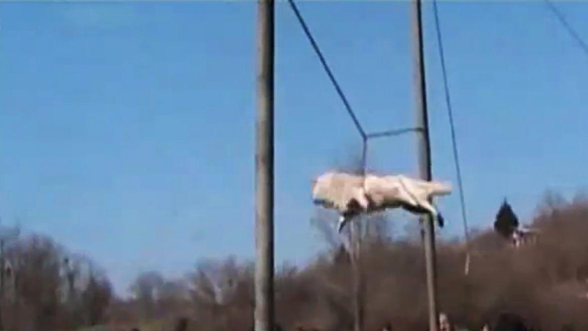 Bulharský psí rituál \