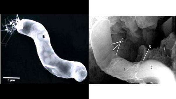 Zkamenělá mimozemská bakterie