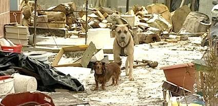 Opuštění psi