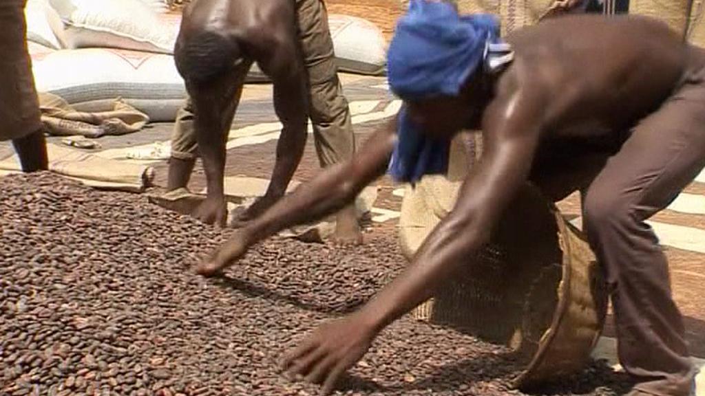Zpracování kakaa