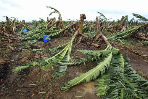 Cyklon Yasi zlikvidoval banánové plantáže