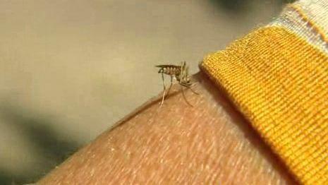 Komáři útočí