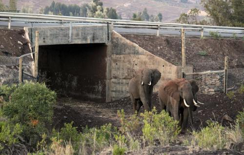 Keňským slonům slouží nový podchod
