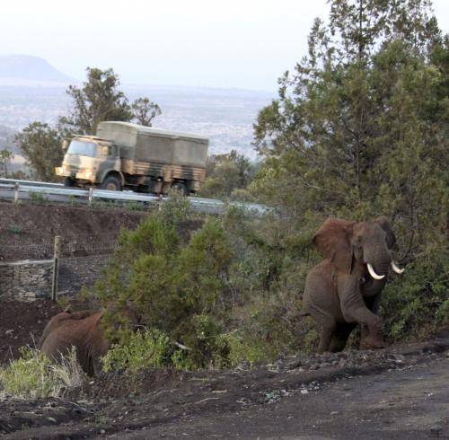 Sloni procházejí podchodem