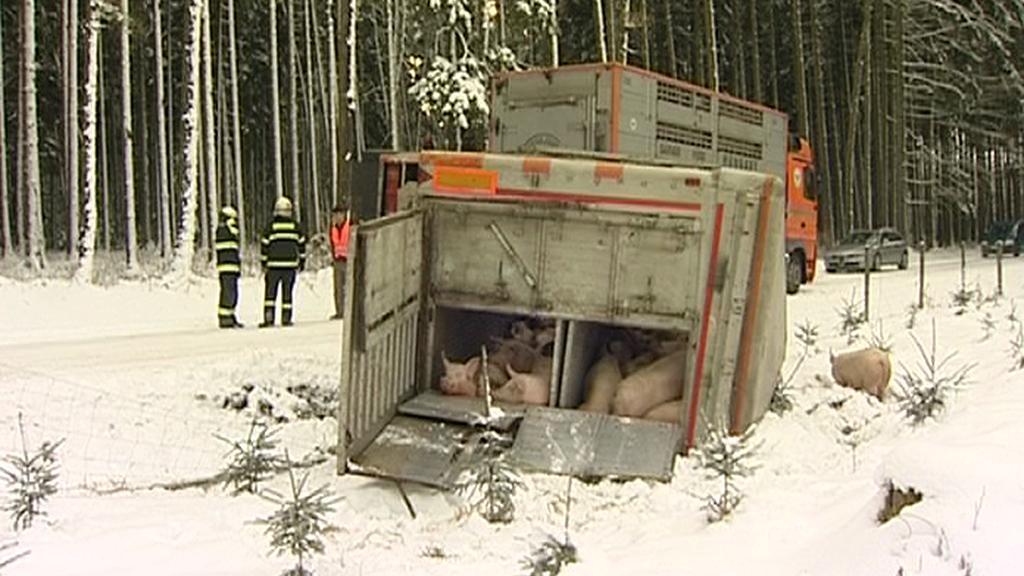 Nehoda nákladního auta s prasaty