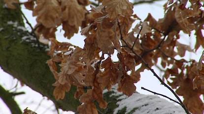 Stromy v zimě