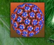 Papillomaviry