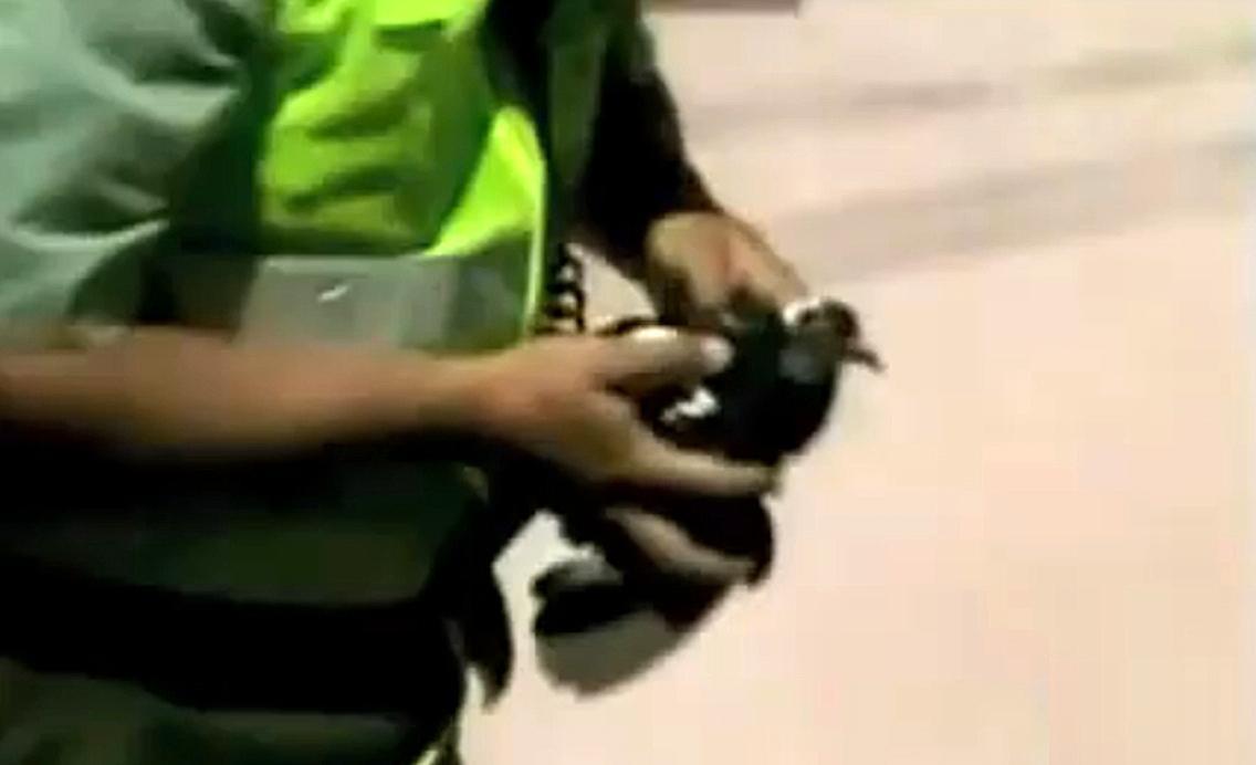 Kolumbijští policisté s chyceným holubem s balíčkem drog