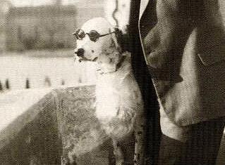 Pes, který hajloval