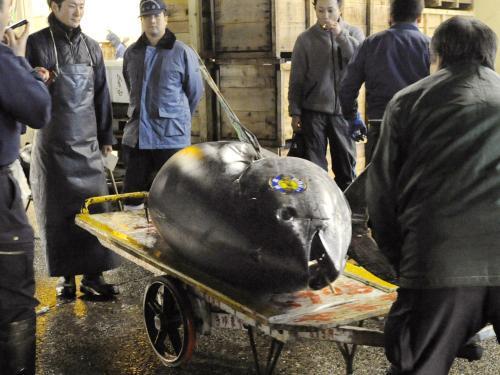 Tuňák vydražený za rekordních 7 milionů