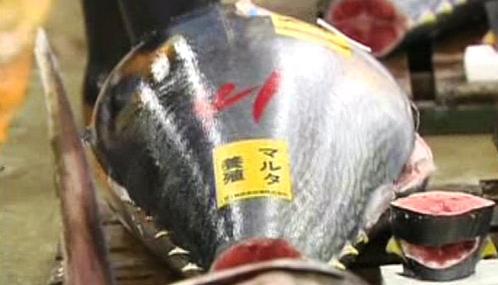 Aukce tuňáků v Japonsku
