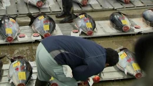 Dražba tuňáků v Japonsku