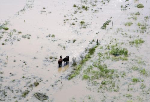 V zaplavené krajině uvízli i dva koně