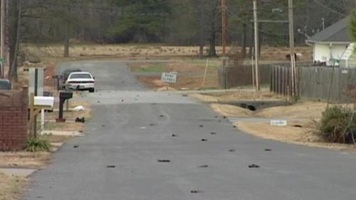 V Arkansasu spadla z nebe tisícovka mrtvých kosů