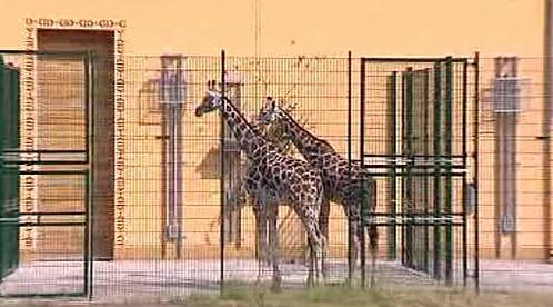 Pavilon žiraf v plzeňské zoo