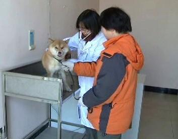 Pes u čínské veterinářky