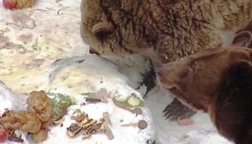 Českokrumlovští medvědi slaví Vánoce