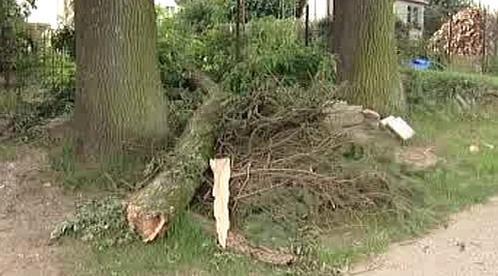 Spadlá větev