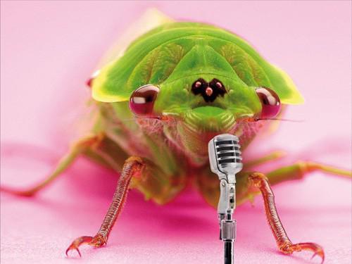 Zpívající hmyz