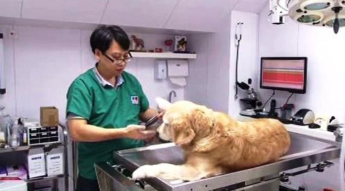 Psí klinika