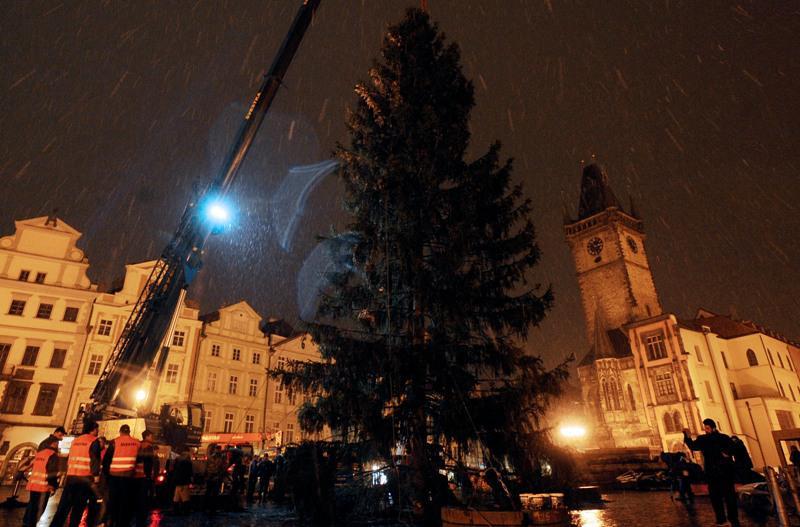Vztyčení vánočního stromu