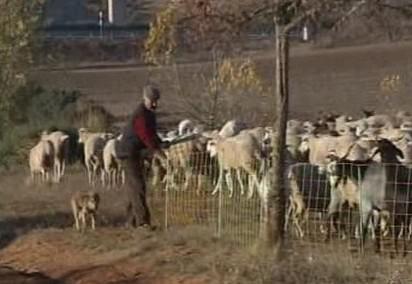 Španělští pastevci