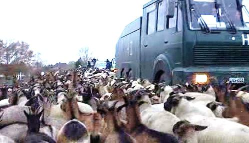 Demonstranti nahnali na trasu jaderného odpadu ovce a kozy