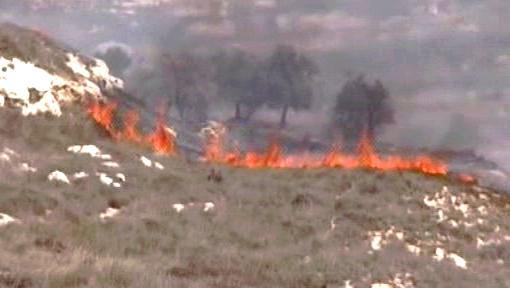 Hořící olivové háje