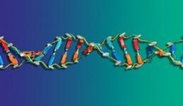 Model DNA
