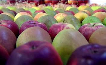 Výstava jablek