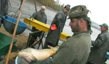 14. výlov ryb v Blatničce