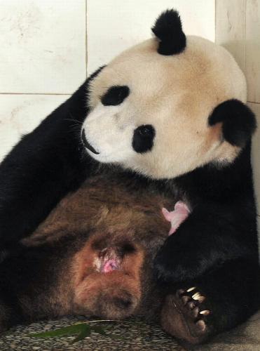 Panda Chua Mej