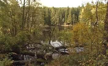 Jezero bobrů u Lesné