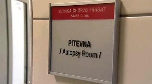 Klinika chorob prasat