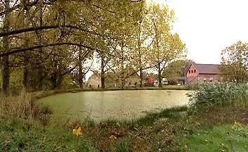Rybník ve Veselově