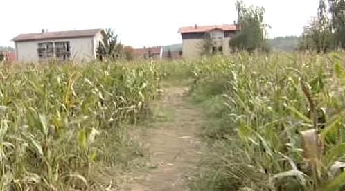 Jedna z cest kukuřičným bludištěm
