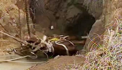 Chilští záchranáři vytahují koně z trhliny