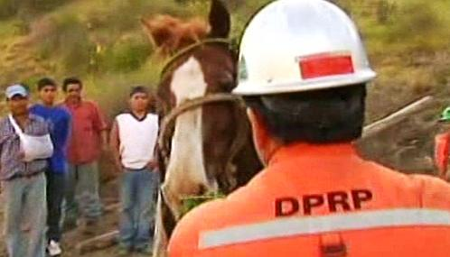 Zachráněný kůň