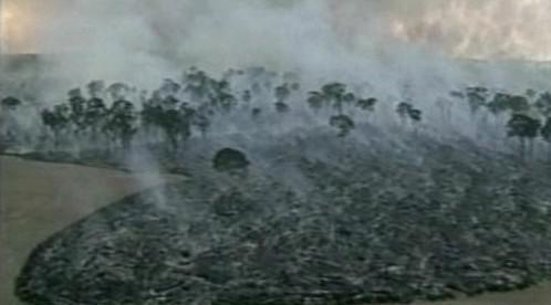 Vypalování pralesa