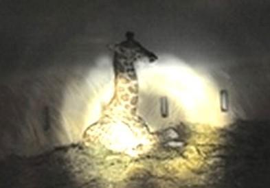 Žirafa při večerní procházce