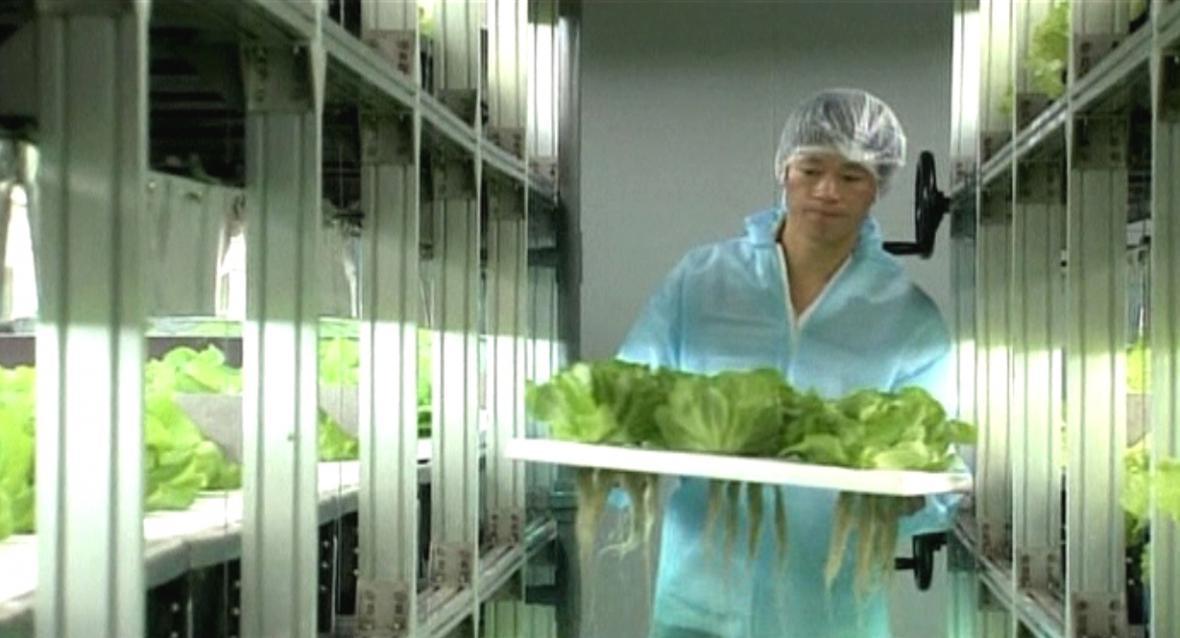 Hi-tech pěstování zeleniny