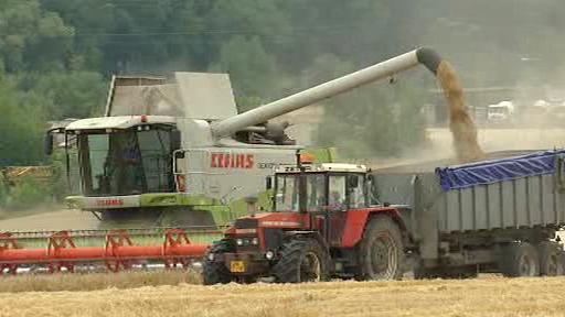 Sklizeň obilí v Rusku