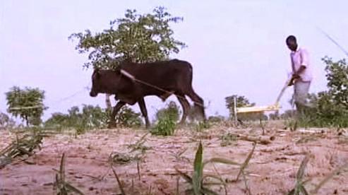 Zemědělci v Africe