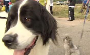 Psi i jejich majitelé překonali český rekord