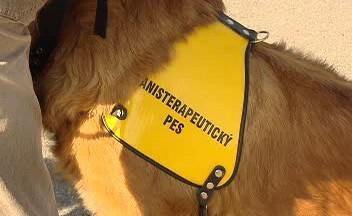 Pes vychovaný pro canisterapii