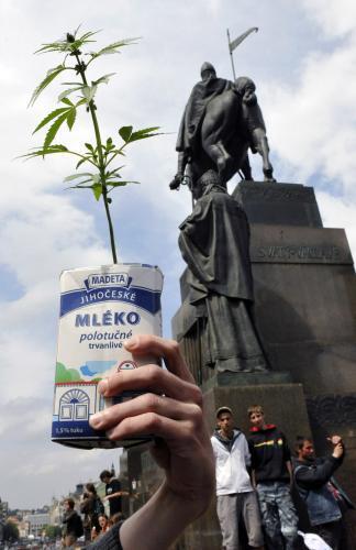 Demonstrace za legalizaci konopí