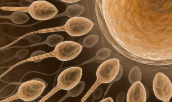 Spermie putují k vajíčku