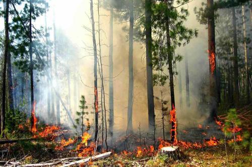 Hořící les